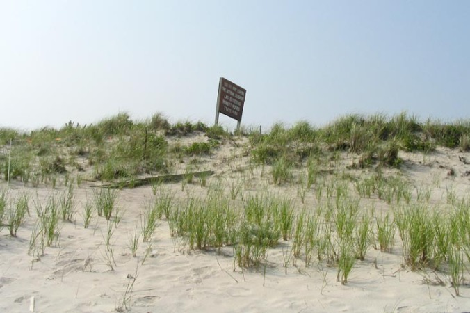Dunes At Field 5, Long Island